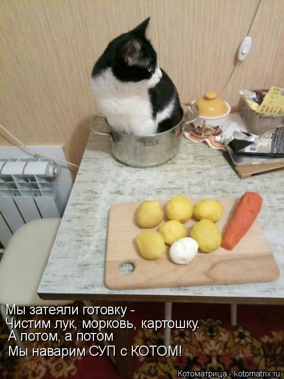 Котоматрица: Мы затеяли готовку -  Чистим лук, морковь, картошку. А потом, а потом  Мы наварим СУП с КОТОМ!