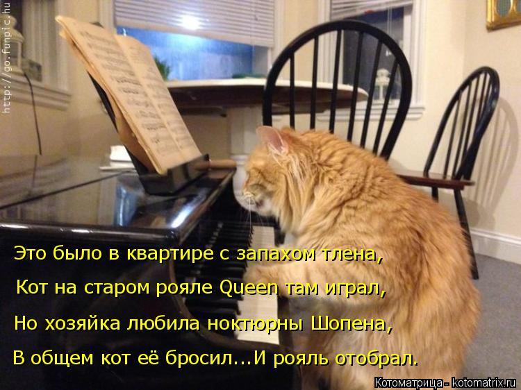 Котоматрица: В общем кот её бросил...И рояль отобрал. Но хозяйка любила ноктюрны Шопена, Кот на старом рояле Queen там играл, Это было в квартире с запахом тл