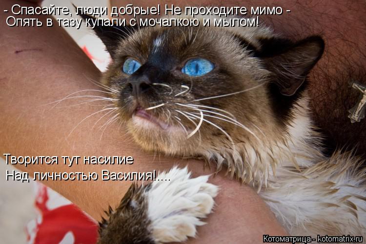 Котоматрица: - Спасайте, люди добрые! Не проходите мимо - Опять в тазу купали с мочалкою и мылом!  Творится тут насилие Над личностью Василия!....