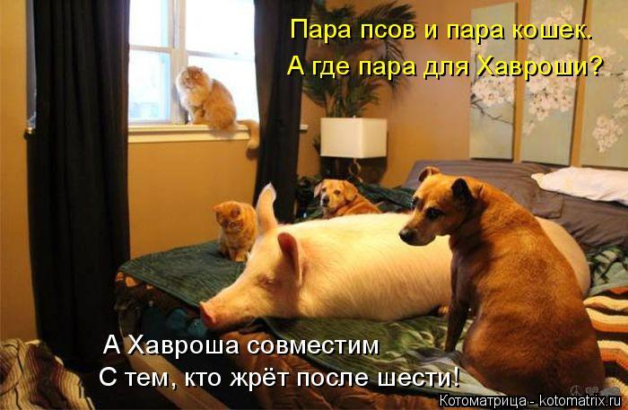 Котоматрица: Пара псов и пара кошек. А где пара для Хавроши? А Хавроша совместим  С тем, кто жрёт после шести!