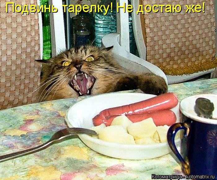 Котоматрица: Подвинь тарелку! Не достаю же!