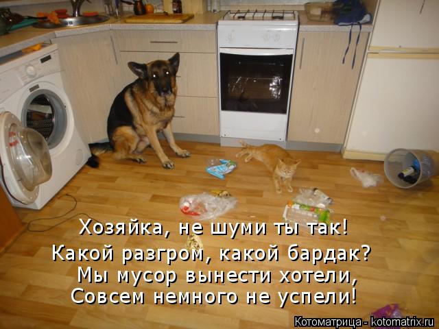 Котоматрица: Хозяйка, не шуми ты так! Какой разгром, какой бардак? Мы мусор вынести хотели, Совсем немного не успели!