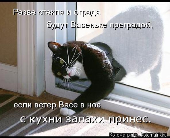 Котоматрица: если ветер Васе в нос с кухни запахи принес. Разве стекла и ограда будут Васеньке преградой,