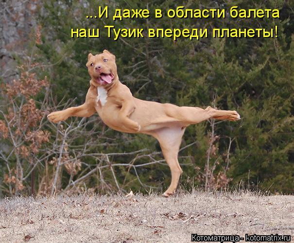 Котоматрица: ...И даже в области балета наш Тузик впереди планеты!