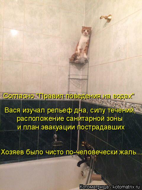 Котоматрица: Хозяев было чисто по-человечески жаль...  и план эвакуации пострадавших расположение санитарной зоны Вася изучал рельеф дна, силу течений, С