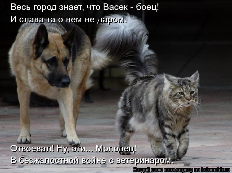 Котоматрица: Весь город знает, что Васек - боец! И слава та о нем не даром. В безжалостной войне с ветеринаром. Отвоевал! Ну, эти... Молодец!