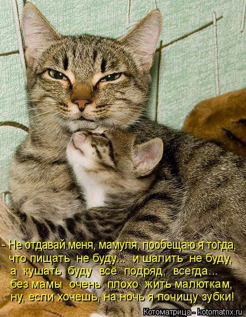 Котоматрица: - Не отдавай меня, мамуля, пообещаю я тогда, что пищать  не буду...  и шалить  не буду, а  кушать  буду  всё  подряд,  всегда... без мамы  очень  плохо