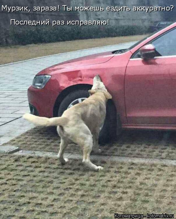 Котоматрица: Мурзик, зараза! Ты можешь ездить аккуратно?  Последний раз исправляю!