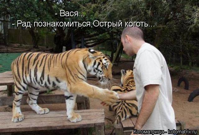 Котоматрица: - Вася... - Рад познакомиться,Острый коготь...