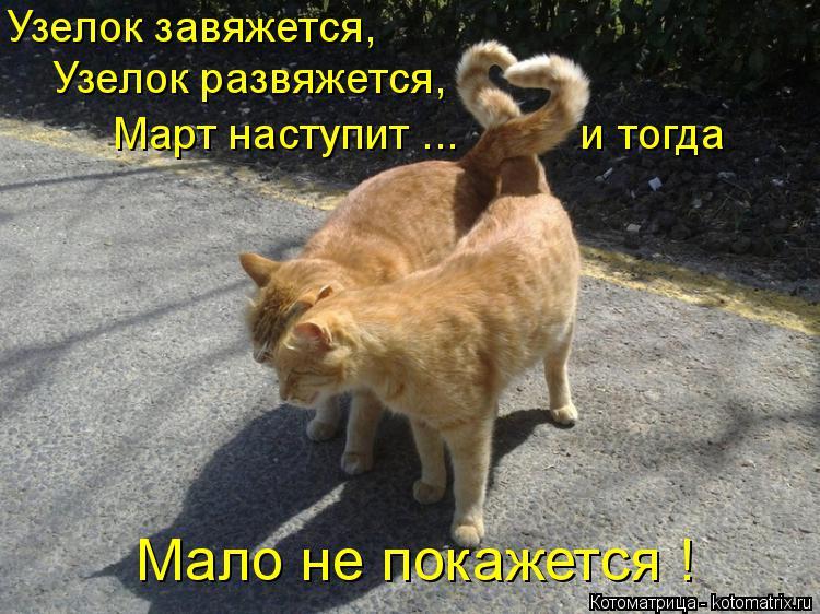 Котоматрица: Узелок завяжется, Узелок развяжется, Март наступит ...          и тогда Мало не покажется !