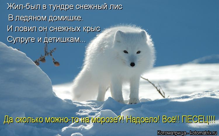 Котоматрица: Жил-был в тундре снежный лис В ледяном домишке. И ловил он снежных крыс Супруге и детишкам... Да сколько можно-то на морозе?! Надоело! Всё!! ПЕС