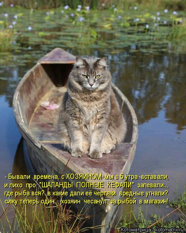 """Котоматрица: - Бывали  времена, с ХОЗЯИНОМ  мы в 5 утра  вставали, и лихо  про  """"ШАЛАНДЫ  ПОЛНЫЕ  КЕФАЛИ""""  запевали... где рыба вся?  в какие дали её чертяки  вред"""