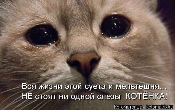 Котоматрица: Вся жизни этой суета и мельтешня... НЕ стоят ни одной слезы  КОТЁНКА!