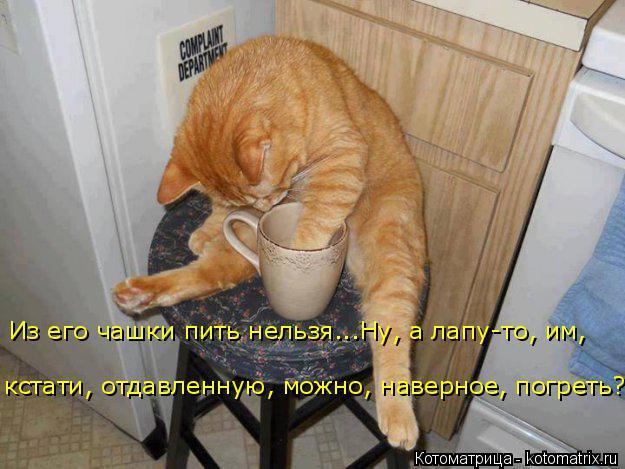 Котоматрица: Из его чашки пить нельзя...Ну, а лапу-то, им,  кстати, отдавленную, можно, наверное, погреть?