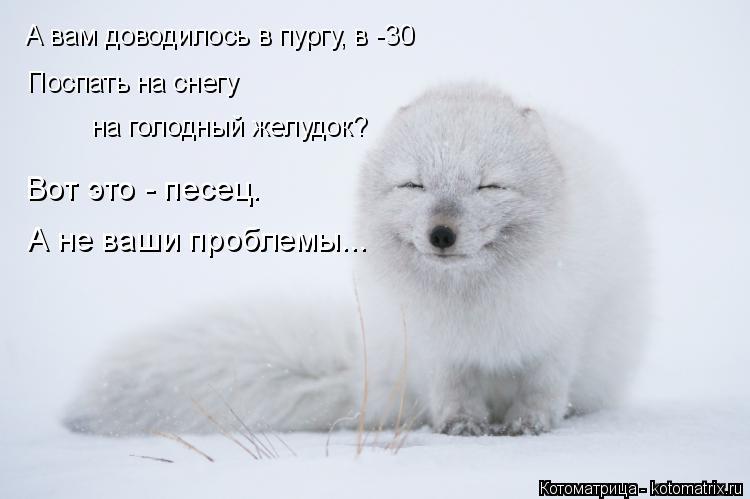 Котоматрица: А вам доводилось в пургу, в -30 на голодный желудок? Поспать на снегу Вот это - песец. А не ваши проблемы...