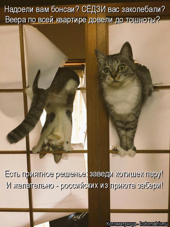 Котоматрица: Надоели вам бонсаи? СЁДЗИ вас заколебали? Веера по всей квартире довели до тошноты? Есть приятное решенье: заведи котишек пару! И желательно