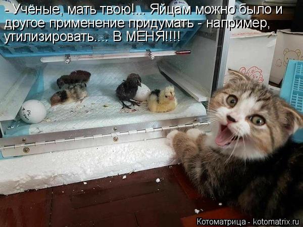 Котоматрица: - Учёные, мать твою!... Яйцам можно было и утилизировать.... В МЕНЯ!!!! другое применение придумать - например,