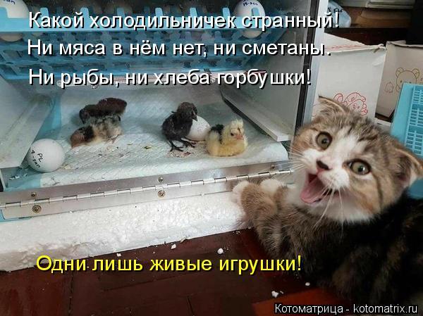 Котоматрица: Какой холодильничек странный! Ни мяса в нём нет, ни сметаны. Ни рыбы, ни хлеба горбушки! Одни лишь живые игрушки!