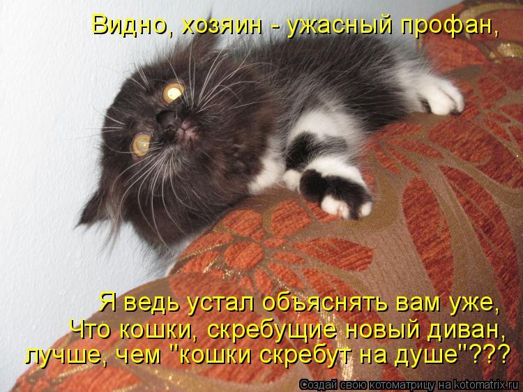 """Котоматрица: Что кошки, скребущие новый диван,  лучше, чем """"кошки скребут на душе""""??? Я ведь устал объяснять вам уже,  Видно, хозяин - ужасный профан,"""