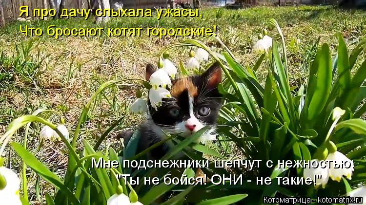 """Котоматрица: Я про дачу слыхала ужасы, Что бросают котят городские! Мне подснежники шепчут с нежностью: """"Ты не бойся! ОНИ - не такие!"""""""