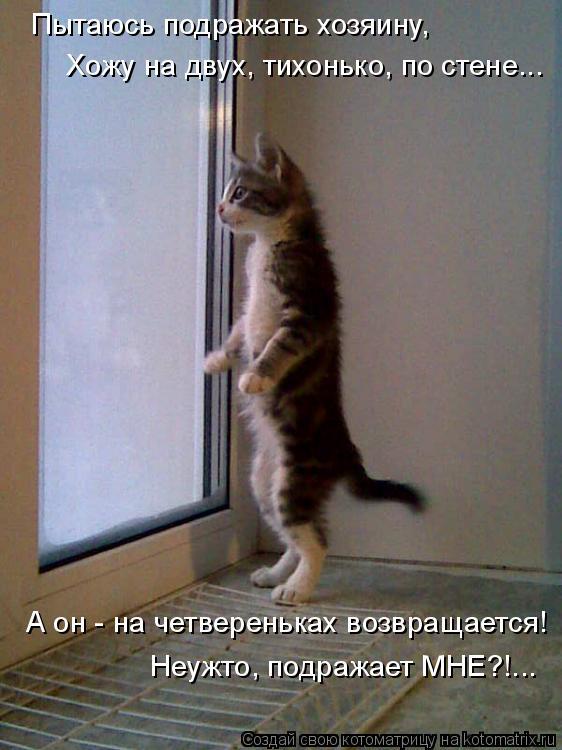 Котоматрица: Пытаюсь подражать хозяину,  А он - на четвереньках возвращается! Хожу на двух, тихонько, по стене... Неужто, подражает МНЕ?!...