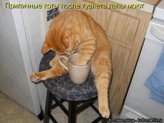 Котоматрица: Пиличные коты после туалета моют лапы Приличные коты после туалета лапы моют