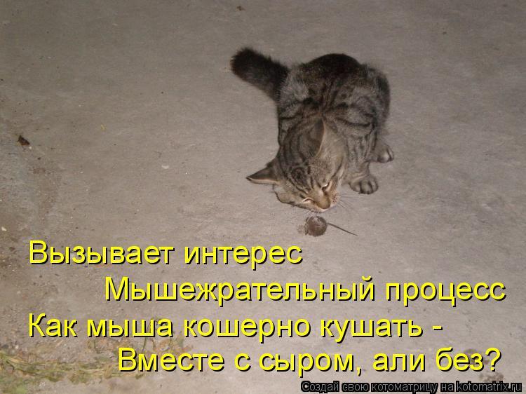 Котоматрица: Вызывает интерес Мышежрательный процесс Как мыша кошерно кушать - Вместе с сыром, али без?