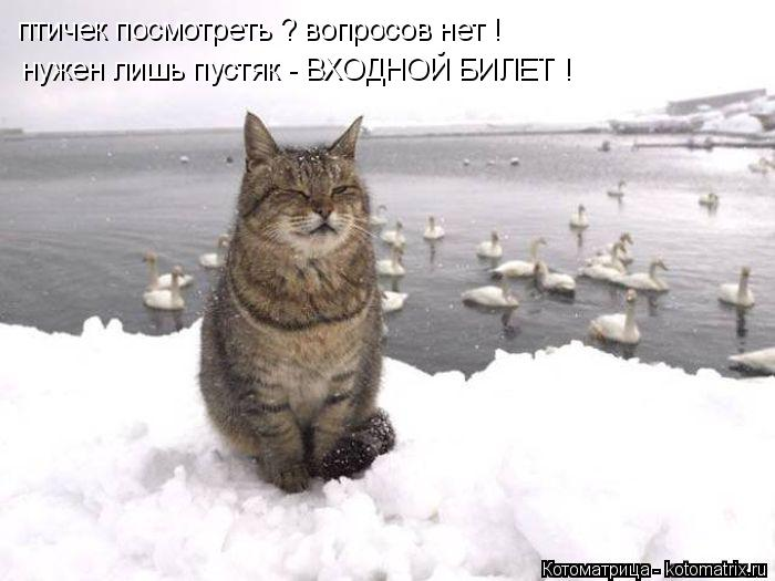 Котоматрица: птичек посмотреть ? вопросов нет ! нужен лишь пустяк - ВХОДНОЙ БИЛЕТ !