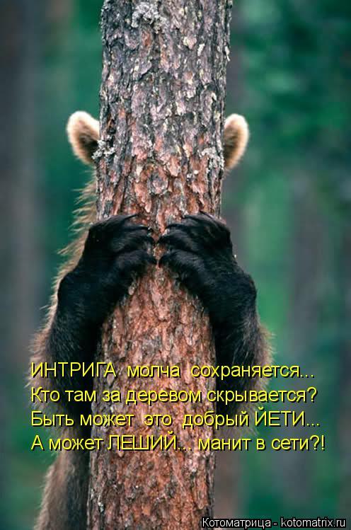 Котоматрица: ИНТРИГА  молча  сохраняется... Кто там за деревом скрывается? Быть может  это  добрый ЙЕТИ... А может ЛЕШИЙ... манит в сети?!