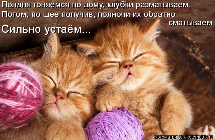 Котоматрица: Полдня гоняемся по дому, клубки разматываем, Потом, по шее получив, полночи их обратно  Сильно устаём... сматываем