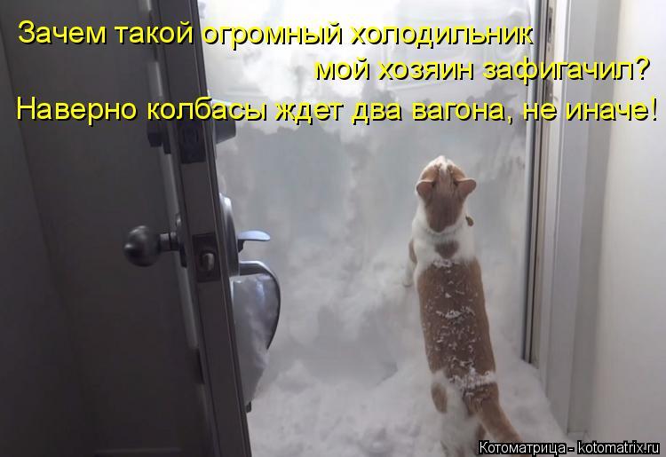 Котоматрица: Зачем такой огромный холодильник  мой хозяин зафигачил? Наверно колбасы ждет два вагона, не иначе!