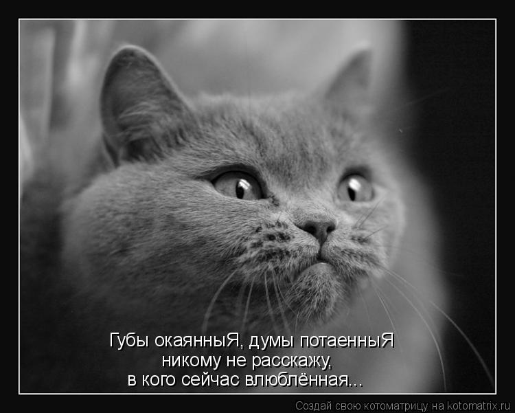 Котоматрица: Губы окаянныЯ, думы потаенныЯ никому не расскажу, в кого сейчас влюблённая...