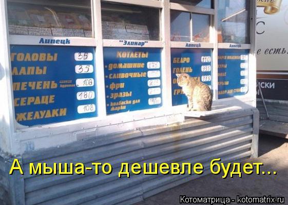 Котоматрица: А мыша-то дешевле будет...
