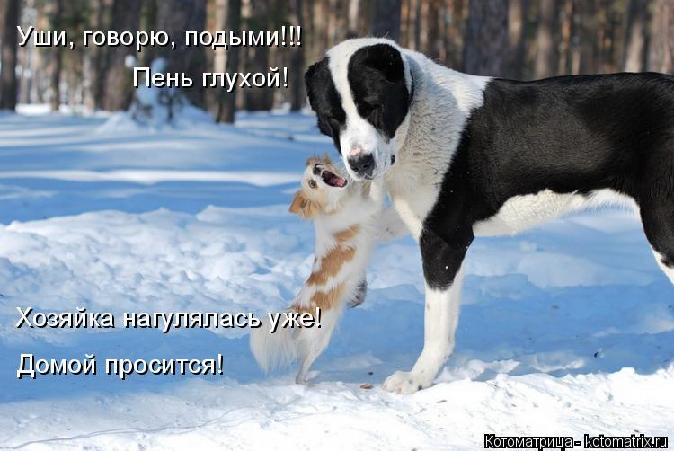Котоматрица: Уши, говорю, подыми!!! Пень глухой! Домой просится! Хозяйка нагулялась уже!