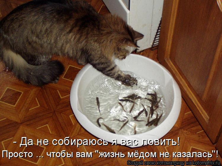 """Котоматрица: - Да не собираюсь я вас ловить! Просто ... чтобы вам """"жизнь мёдом не казалась""""!"""
