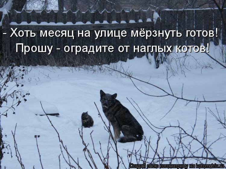 Котоматрица: - Хоть месяц на улице мёрзнуть готов! Прошу - оградите от наглых котов!