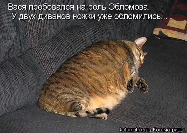 Котоматрица: Вася пробовался на роль Обломова. У двух диванов ножки уже обломились...