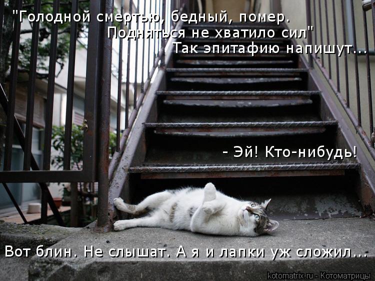 """Котоматрица: """"Голодной смертью, бедный, помер.  Подняться не хватило сил"""" Так эпитафию напишут... - Эй! Кто-нибудь! Вот блин. Не слышат. А я и лапки уж сложил..."""