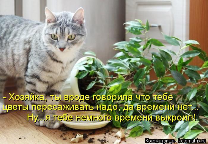 Котоматрица: - Хозяйка, ты вроде говорила что тебе  цветы пересаживать надо, да времени нет... Ну...я тебе немного времени выкроил!