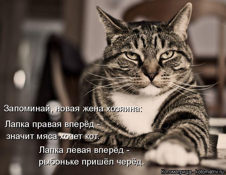 Котоматрица: Запоминай, новая жена хозяина: Лапка правая вперёд -  Лапка левая вперёд -  рыбоньке пришёл черёд. значит мяса хочет кот.