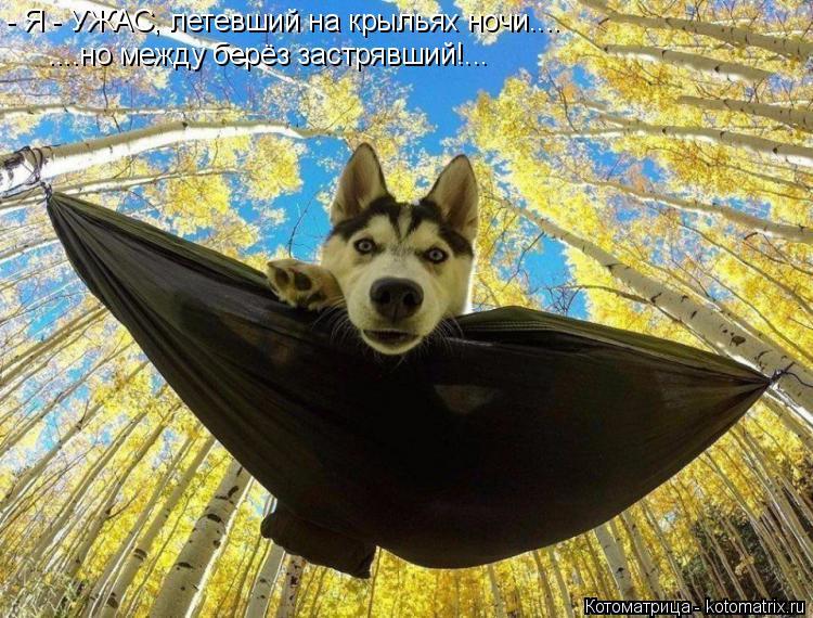 Котоматрица: - Я - УЖАС, летевший на крыльях ночи.... ....но между берёз застрявший!...