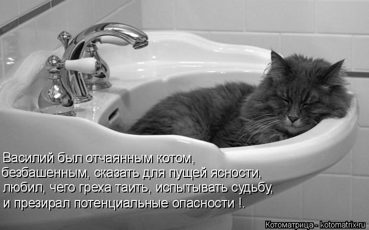 Котоматрица: Василий был отчаянным котом, безбашенным, сказать для пущей ясности, любил, чего греха таить, испытывать судьбу, и презирал потенциальные о