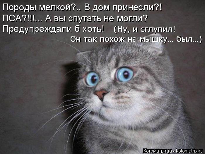 Котоматрица: Породы мелкой?.. В дом принесли?! ПСА?!!!... А вы спутать не могли? Предупреждали б хоть!  Он так похож на мышку… был…) (Ну, и сглупил!