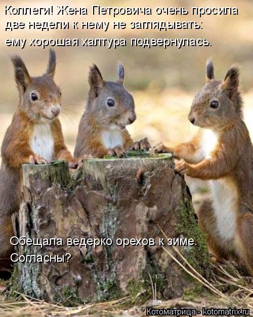 Котоматрица: Коллеги! Жена Петровича очень просила две недели к нему не заглядывать: ему хорошая халтура подвернулась. Обещала ведерко орехов к зиме.  Со