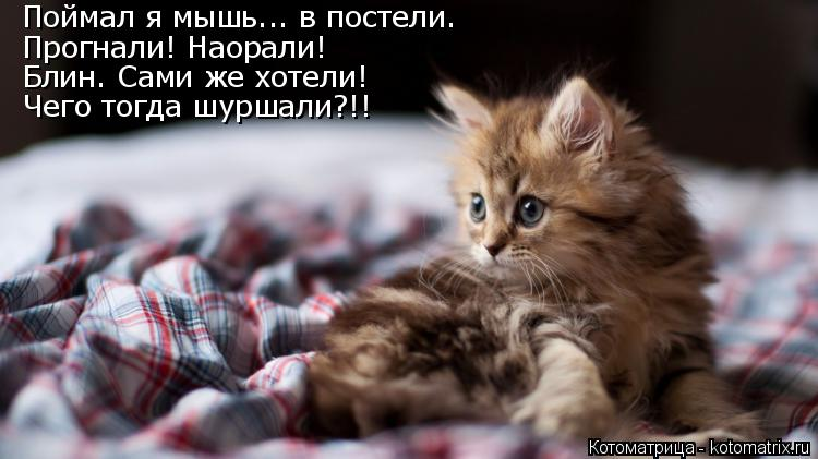 Котоматрица: Поймал я мышь... в постели. Прогнали! Наорали! Блин. Сами же хотели! Чего тогда шуршали?!!
