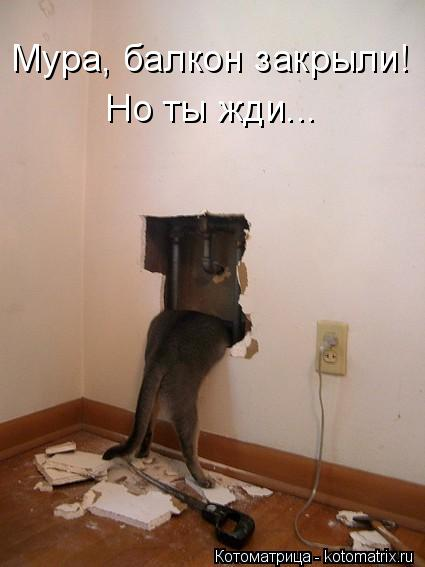 Котоматрица: Мура, балкон закрыли! Но ты жди...