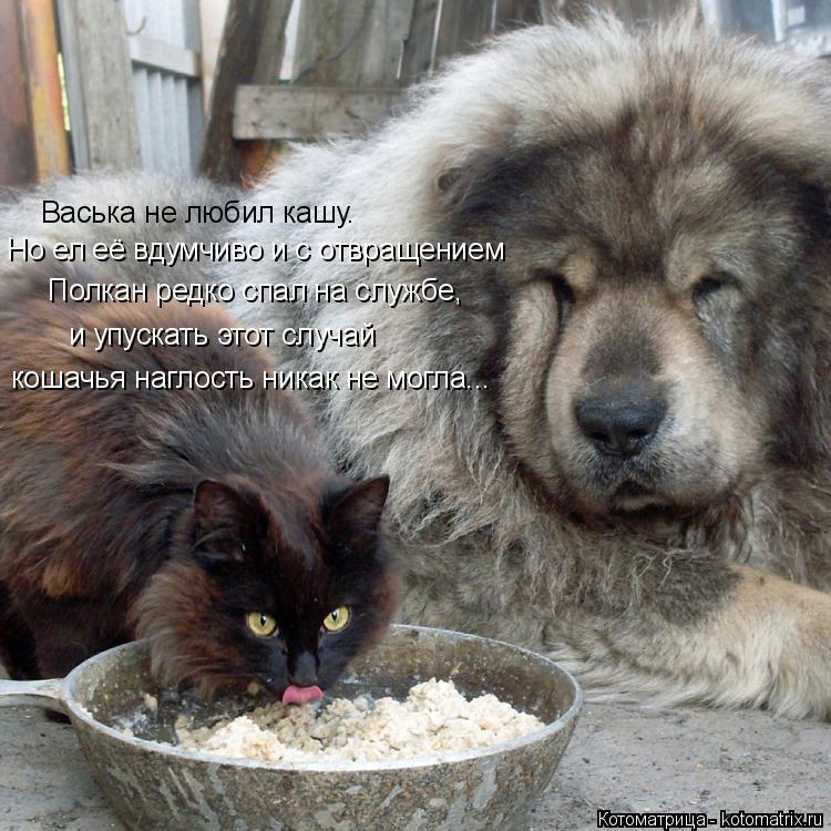 Котоматрица: Васька не любил кашу. Но ел её вдумчиво и с отвращением Полкан редко спал на службе, и упускать этот случай кошачья наглость никак не могла...
