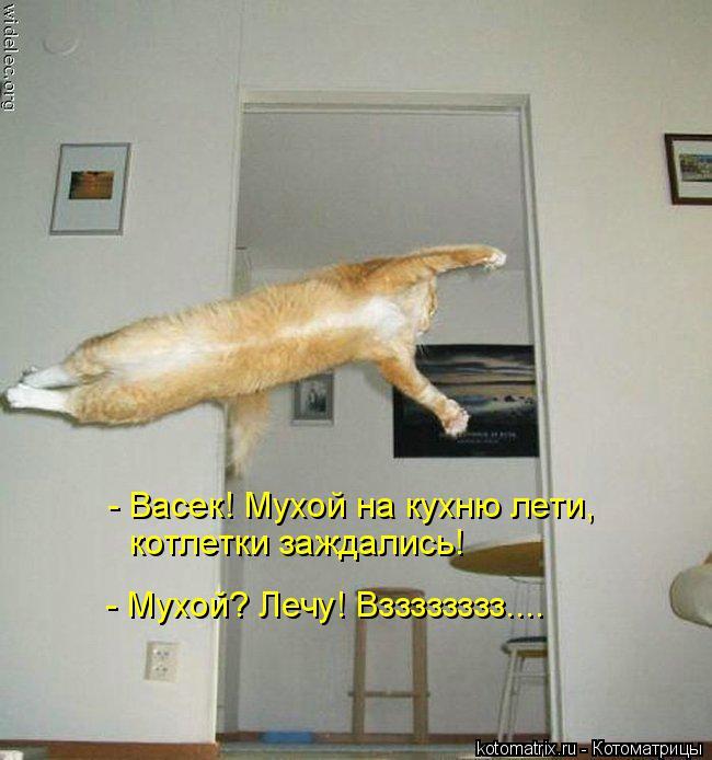 Котоматрица: - Васек! Мухой на кухню лети,  котлетки заждались! - Мухой? Лечу! Взззззззз....