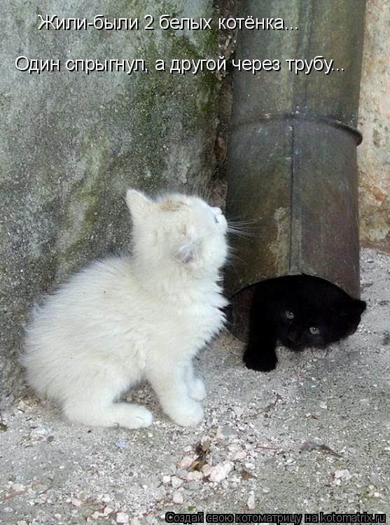 Котоматрица: Жили-были 2 белых котёнка... Один спрыгнул, а другой через трубу...