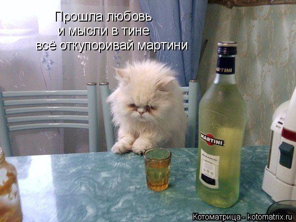 Котоматрица: Прошла любовь и мысли в тине всё откупоривай мартини